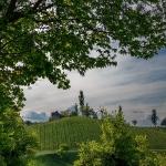 Landschaft_6
